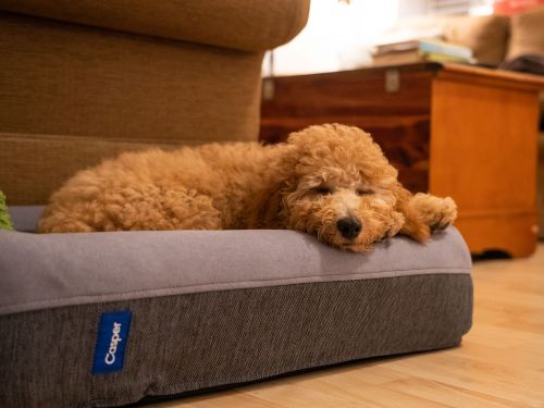 My puppy instantly loved the Casper dog bed - it's a comfortable memory foam bed that withstands digging