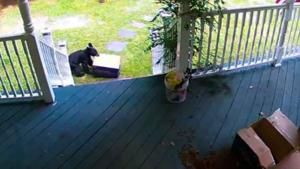 Bear bandit caught stealing dog food delivery