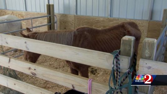 Horse dies from neglect, 3 others seized from Brevard ranch