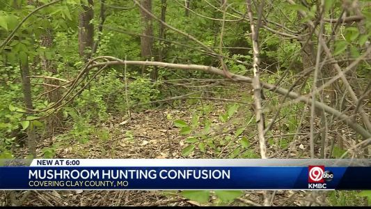 Mushroom hunters told they can't pick near Smithville Lake
