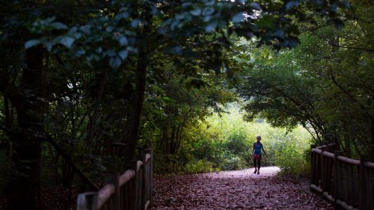 Public input needed on plans to improve natural trails at Cherokee, Seneca, Iroquois parks