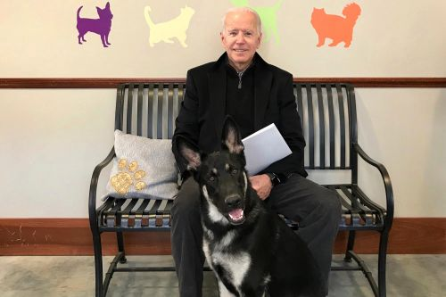 Joe Biden twists ankle while playing with his dog