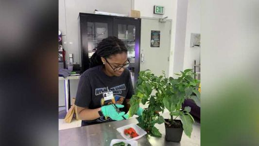 University partners with NASA to explore how to grow food in space