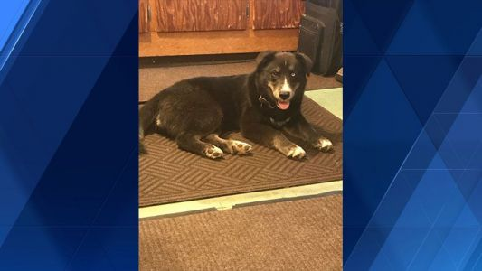 Dog shot in town of Wheatland