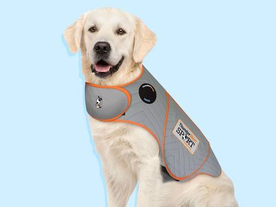 The 5 best dog anxiety vests in 2021