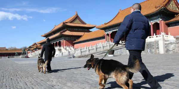 A Chinese city banned dog walking in the daytime, one of a string of measures to crack down on pets