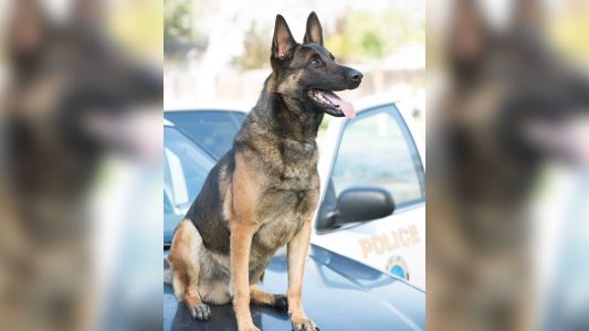'This unfortunate incident was not intentional': Police say K-9 found dead in hot patrol car