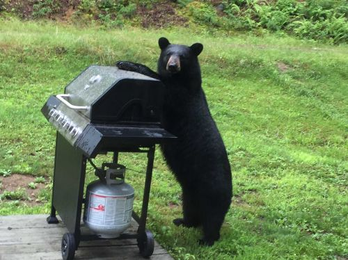 Evidence that bears just do not care