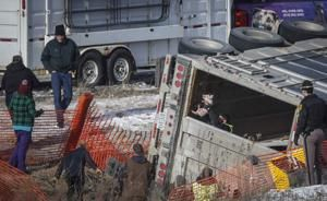 This little piggy and his 1,699 friends escape overturned truck