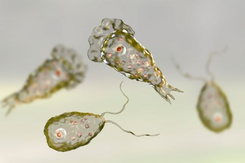 Patient contracts rare brain-eating amoeba in Florida
