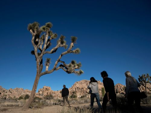 Joshua Trees Cut Down as National Park Stays Open During Government Shutdown