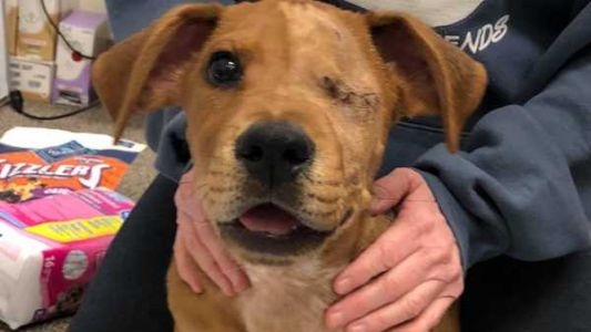 Puppy who had tail, legs severed in train accident now up for adoption