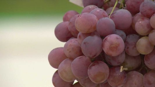 Officers armed with patrol rifles will be at Lodi Grape Festival, police say