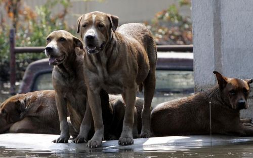 This bill could punish owners who abandon, restrain dogs during natural disasters