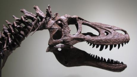 'Fossil hunter' flogs baby T. rex for $2.95mn on eBay, angering scientists
