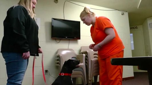 Inmates are training rescued dogs at this New York prison