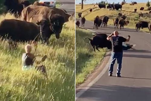 Bison rips pants off woman in violent attack caught-on-video