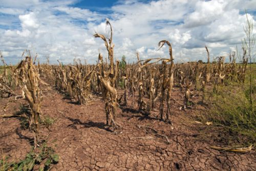 Researchers explore the effects of climate change on hunger