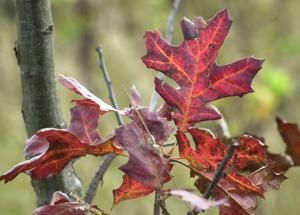 Ask the Weather Guys: How does weather affect fall colors?