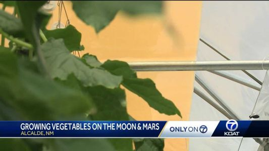 Growing life on Mars and the Moon