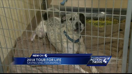 2018 Tour for Life: Saving shelter animals