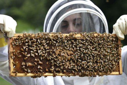 Veterans with PTSD, anxiety turn to beekeeping