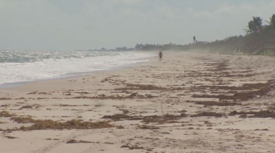 Tests confirm red tide on Brevard County beaches