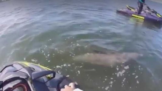 Whoa! Video captures people on personal watercraft helping dolphin trapped in rope