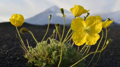 Russia's Kamchatka Region will choose environment over profit - governor