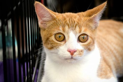 Lawmaker wants pet stores to only sell animals from shelters, rescue groups
