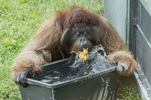How zoo animals are beating a European heatwave