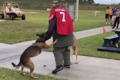 Navy probes event featuring military dogs attacking 'target' in Kaepernick jersey