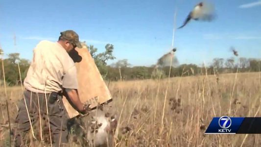 The Great Outdoors: Youth pheasant hunting