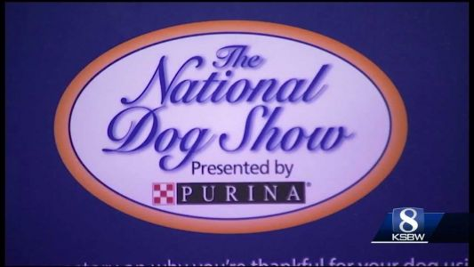 Animal Stories with Dan Green: preview of dog show for thanksgiving