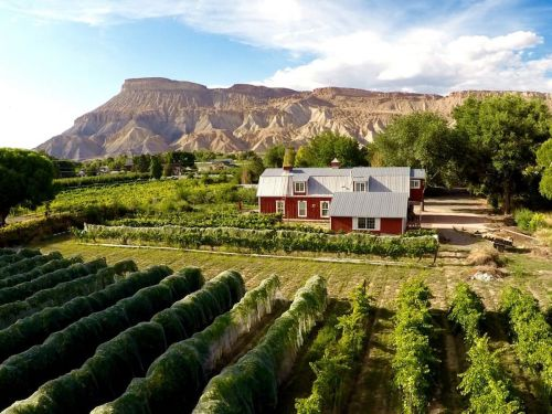 16 of the best Airbnbs near wineries in the US from Napa to the North Fork
