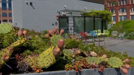 Are 'green roofs' the next eco-friendly initiative for Baltimore?