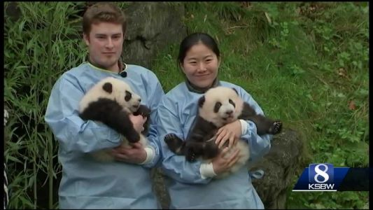 Animal Stories with Dan Green: panda naming