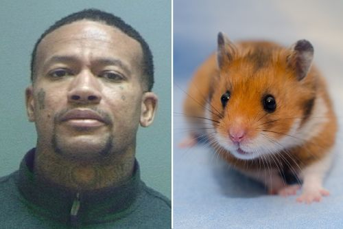 Utah man accused of releasing rodents in hotel rooms to get free stays