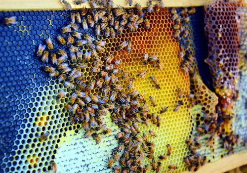 Bethel Park Council approves ordinance on bees