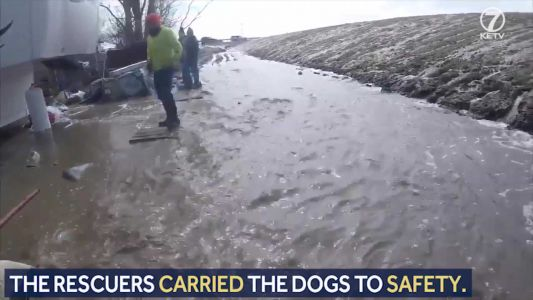 Animals rescued from Pacific Junction, IA