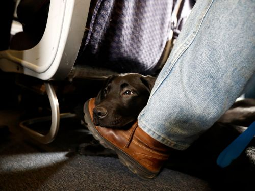 The DOT is cracking down on emotional support animals on airplanes and will only allow trained dogs to fly as service animals