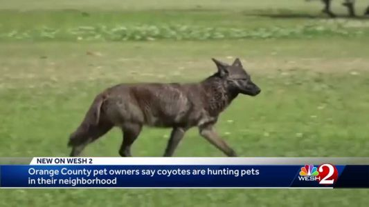 Meeting held on prevention tactics after pets attacked by coyotes in College Park