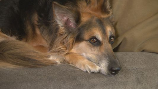 Boston vet warns dog owners about lethal ingredient in sugar-free products