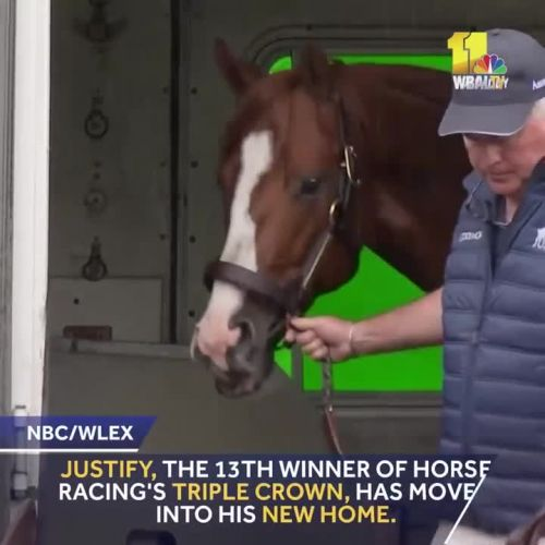 Justify settles in to new home!