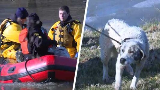 Crews rescue dog swept away by Ohio River floodwaters