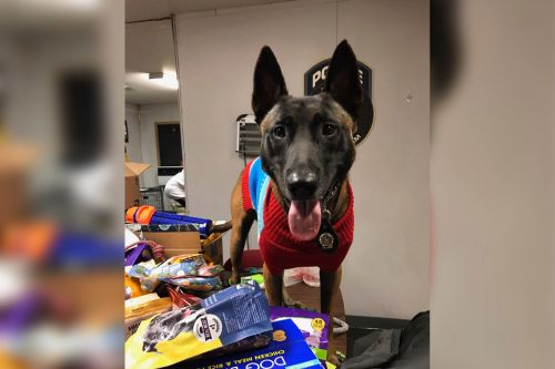 NYPD K9 units collect Christmas toys, treats for deployed 'war dogs'