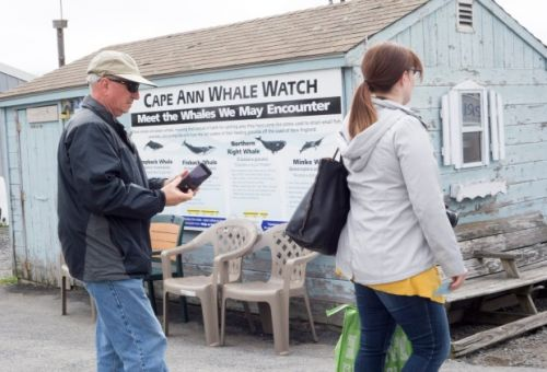 The whales are back - here's where to get a peep at the pods
