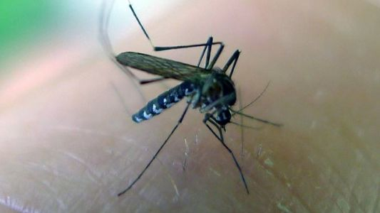 Rare virus detected in mosquito for first time this season