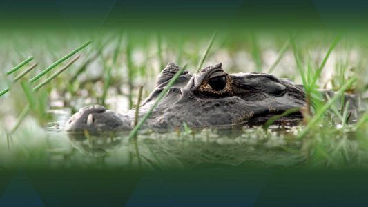 Flushing drugs down toilet could lead to 'meth-gators,' police say
