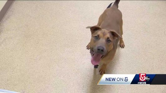 Dog that was shot twice, hit by car has forever home